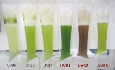 UniVerve Chooses Microalgae For Award-Winning Biofuel Business
