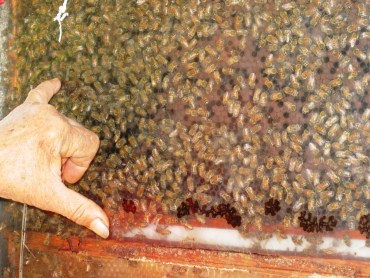 Beeologics Tests Its Antivirals on Collapsing Bee Populations