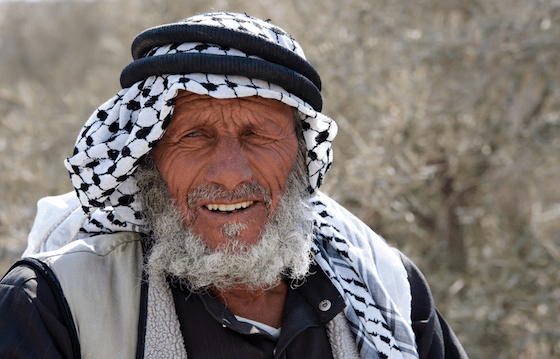 arab man olive grove palestine