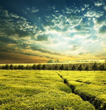 Israeli Business Boosts Agriculture in Kenya