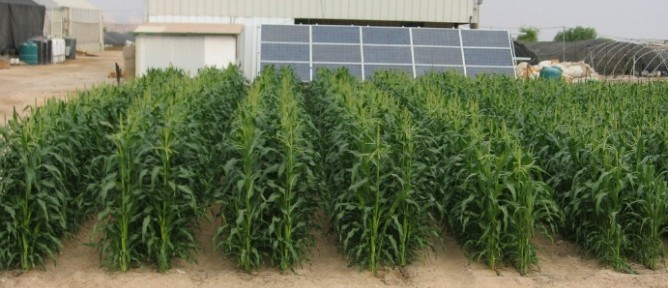 Solar Powered Desert Oasis Uses Desalination to Fight World Hunger
