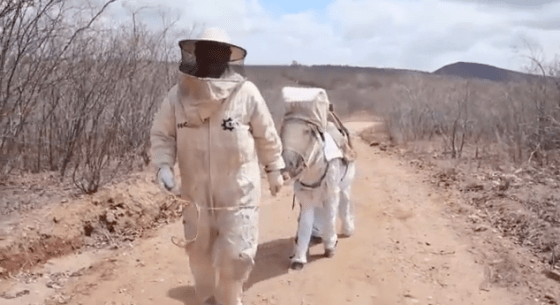 travel, nature, bees, Brazil, beekeeping,