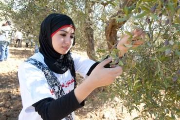 Organic Farming Boom in Palestine