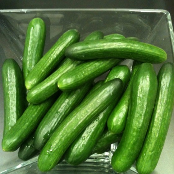 cucumbers sahara desert