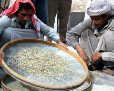 Egypt and Morocco's Equator Prize Winners Preserve Environment through Tradition