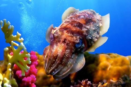 coral, Arabian Gulf, Persian Gulf, marine life, nature conservation, Abu Dhabi, Gulf