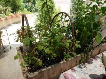 Community Gardens Sprout in Israeli Desert Town