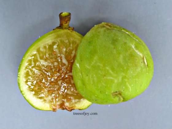 barada Honey flavored from the historic Christian village of Sidnaya