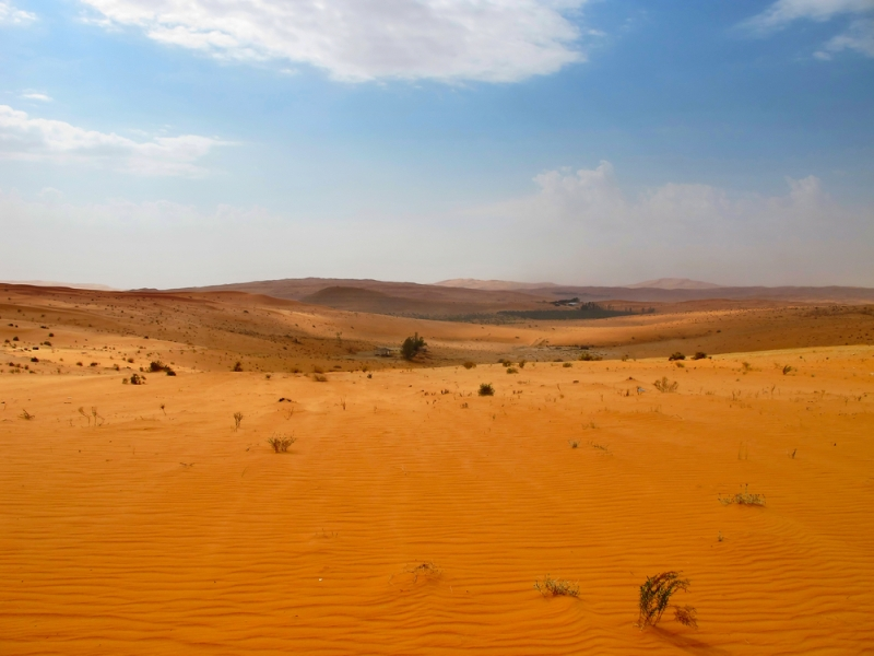 Saudi Agriculture To Be Hit Hard by Climate Change