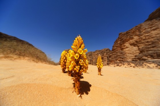 Climate Investment Funds for Super Solar North Africa