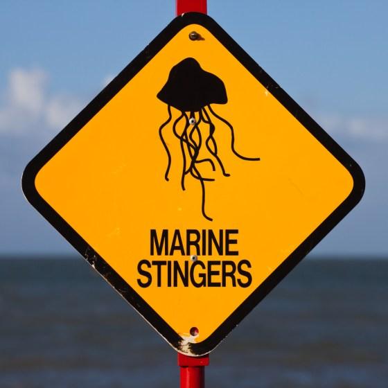 jellyfish warning sign Irukandji