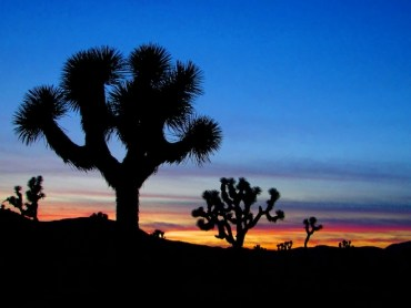 Joshua Tree Light Pollution Dims BrightSource Energy's 500MW Palen Solar Project