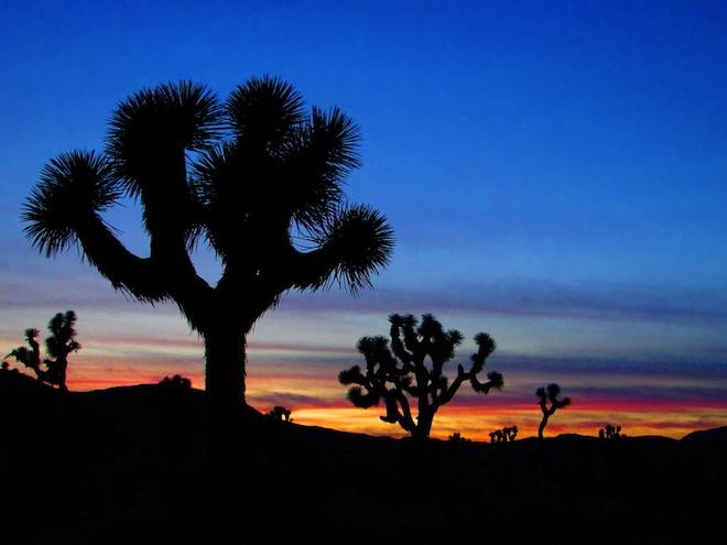Joshua Tree National Park, light pollution, Palen Solar, California solar projects, BrightSource Energy, Abengoa Solar, environmental impact assessment