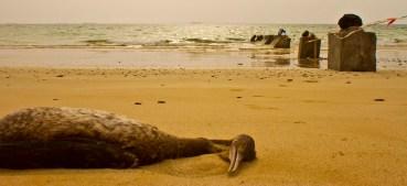 Hundreds of Dead Cormorants Found Slaughtered Near Oman Border