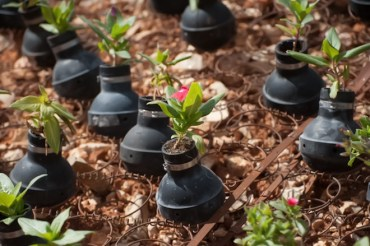 A Grenade Garden Helps Palestinian Mother Move On