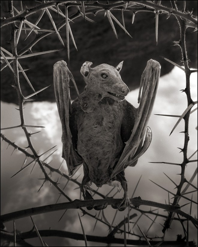 Nick Brandt Photography Lake Natron Turns Animals into Ghostly Statues