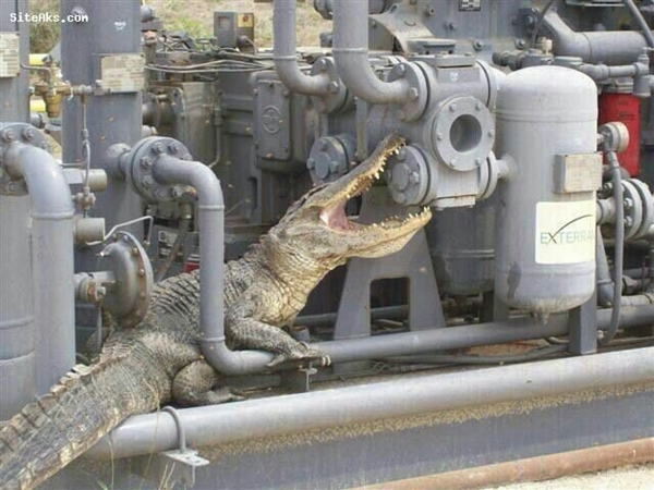 "Alligator sneaks into Iranian gas facility ""no man zone"""