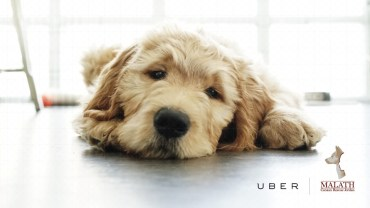 UBER Middle East delivers puppies on-demand in the most adorable fundraiser!