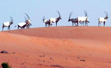 'Arabian Ark' is saving UAE wildlife from extinction