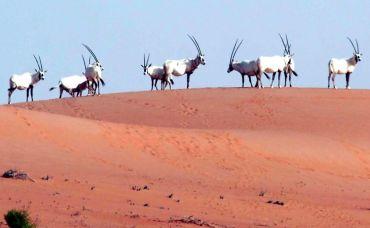 'Arabian Ark' is saving UAE wildlife from extinction