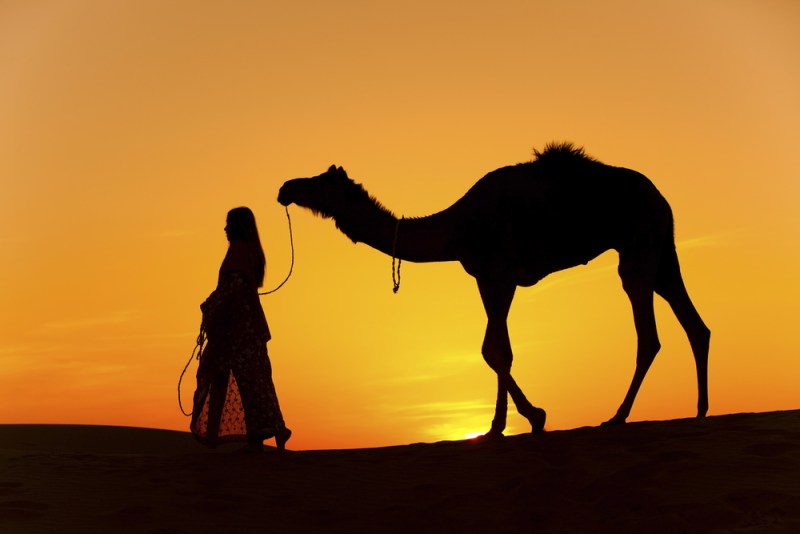 Camel kills woman in fatal mating attempt (with her!!!)