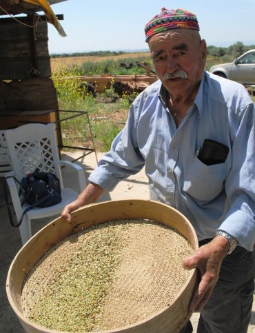 Making freekeh with the Druze