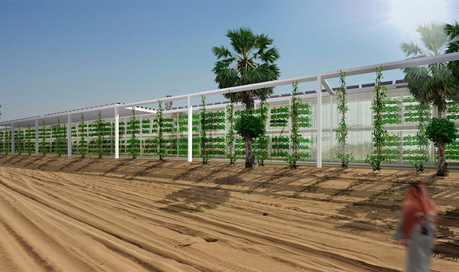 Linear hydroponic farm, Arabian Peninsula, Forward Thinking Architecture, hydroponics, solar power, renewable energy, desert agriculture, food belt, food security, carbon emissions, food miles