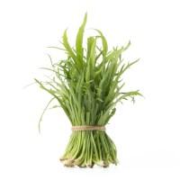 minutina-hydroponics