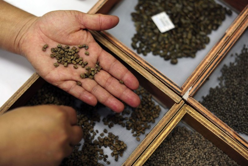 Syria's seedbank seeds sent for safety to Morocco