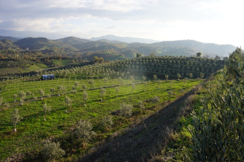 Depleted Turkish coal mine transforms into prize-winning olive groves