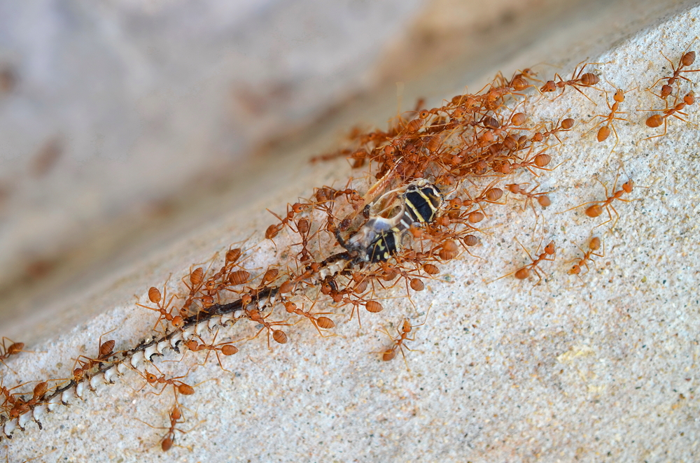 How crowd-sourcing works in the mad world of ants