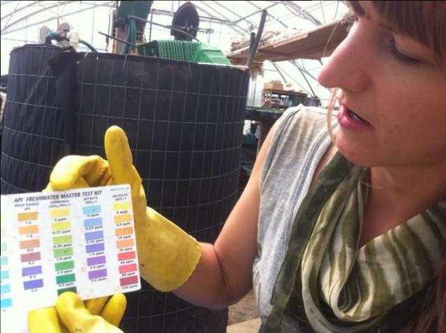 aquaponics-fish-farm