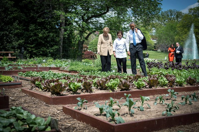 barak-obama-whote-house-kitchen-garden