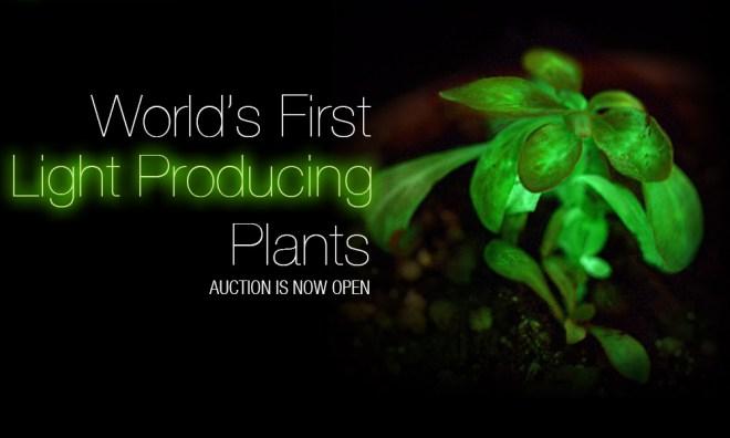 Bioglow plant