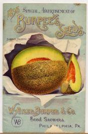 burpee-seeds