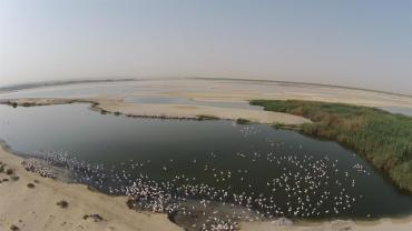 Drones monitor flamboyances of flamingos in this Arab country