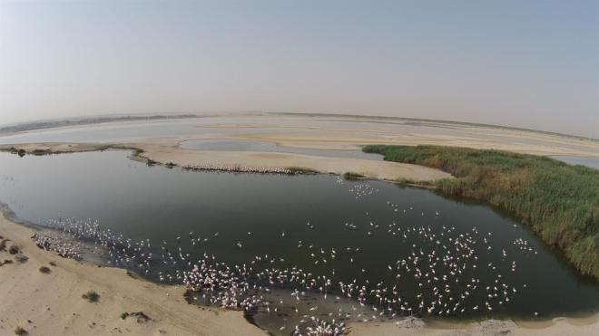 drone_image_breeding_flamingos_al_wathba_wetland_reserve