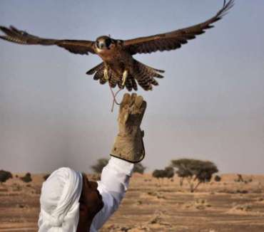 Abu Dhabi falconers think drones are for the birds