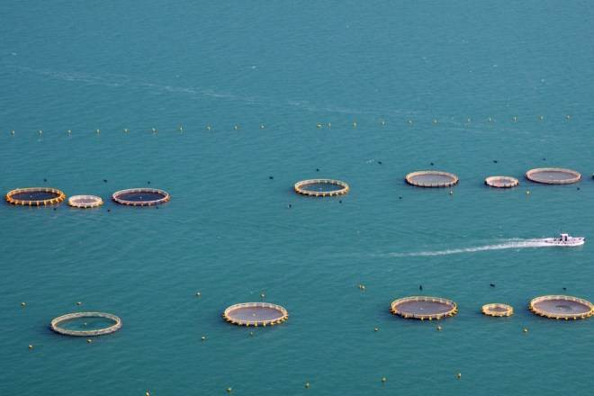 fish farming at sea