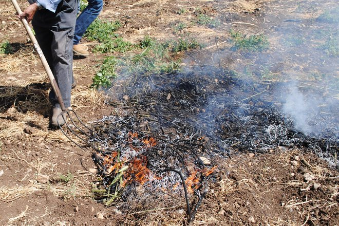 bonfire dies down with freekeh