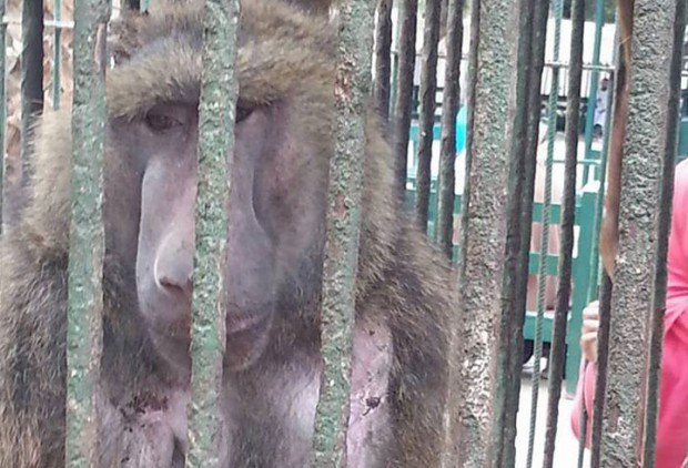 Neglected animals turn to cannibalism in Egyptian zoo