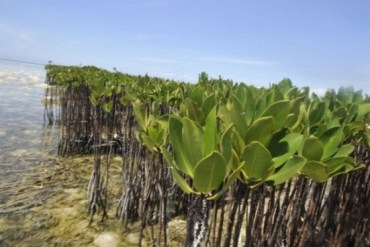 Qatar Must Stop Shoreline Development to Save Mangrove Forests