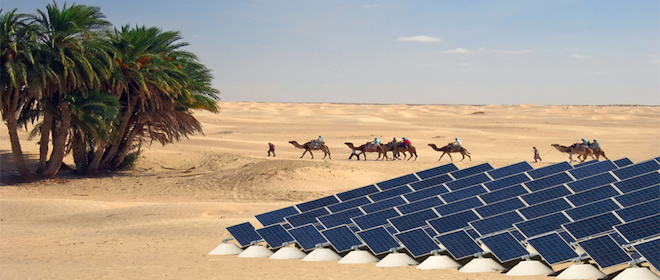 solar energy, camels