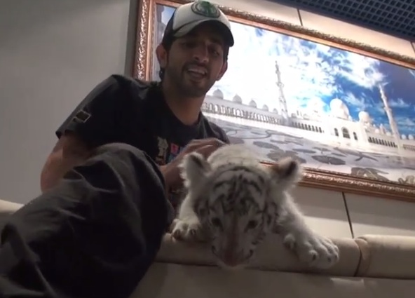 prince white cub