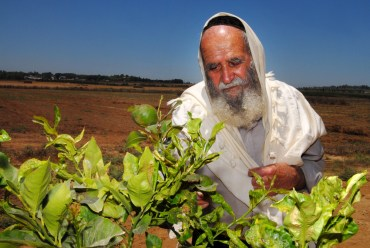 Shmita and surviving a year in Israel without starving as the land rests