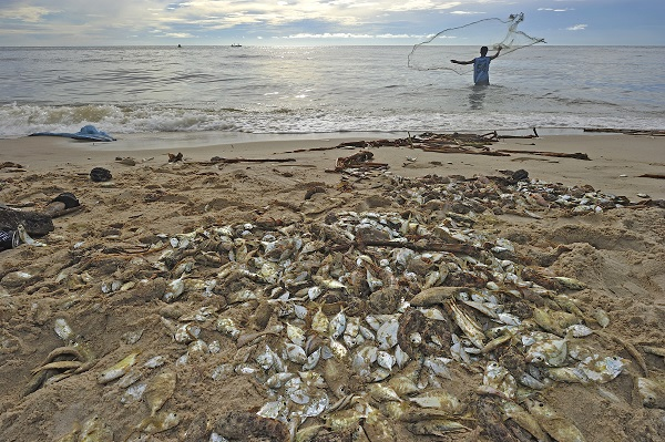 Mysterious mass fish die-off in Tunisia sparks world-ending debate (video)