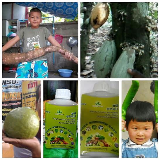 Green World Organic Liquid Fertilizer