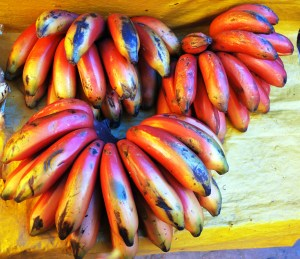 Red Bananas Photo by Thelmadatter, Wikimedia Commons
