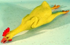 Should you distrust people who play with rubber chickens at work?