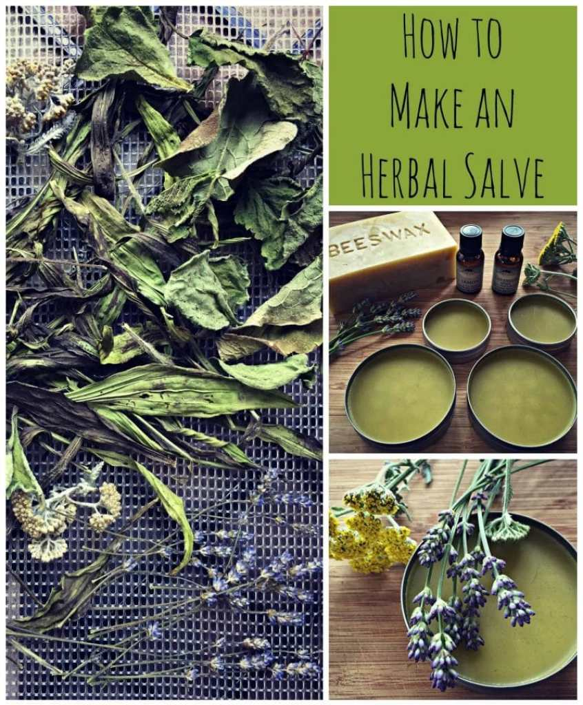 how to use arnica herb